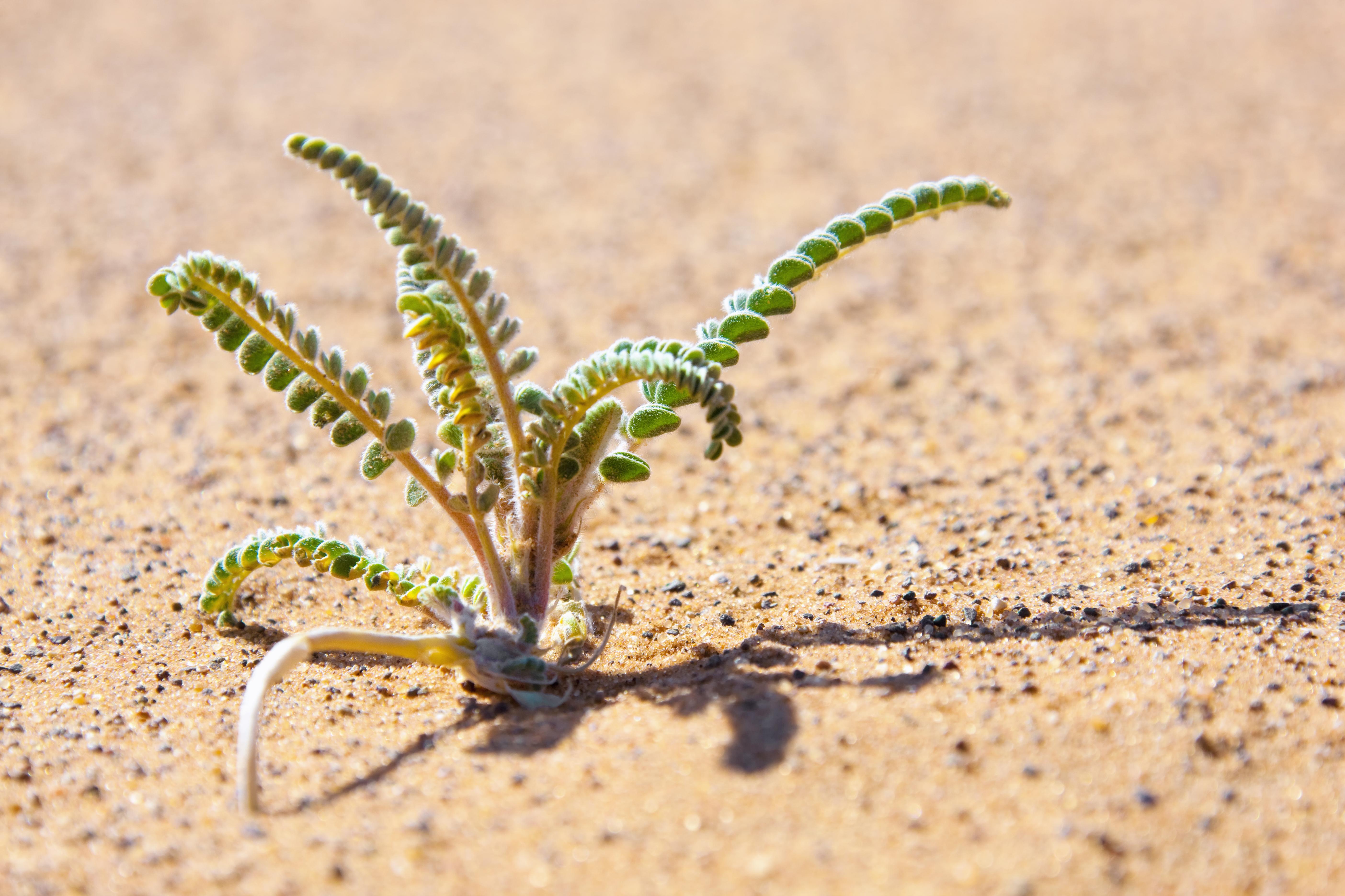 sahara desert plants - HD5616×3744